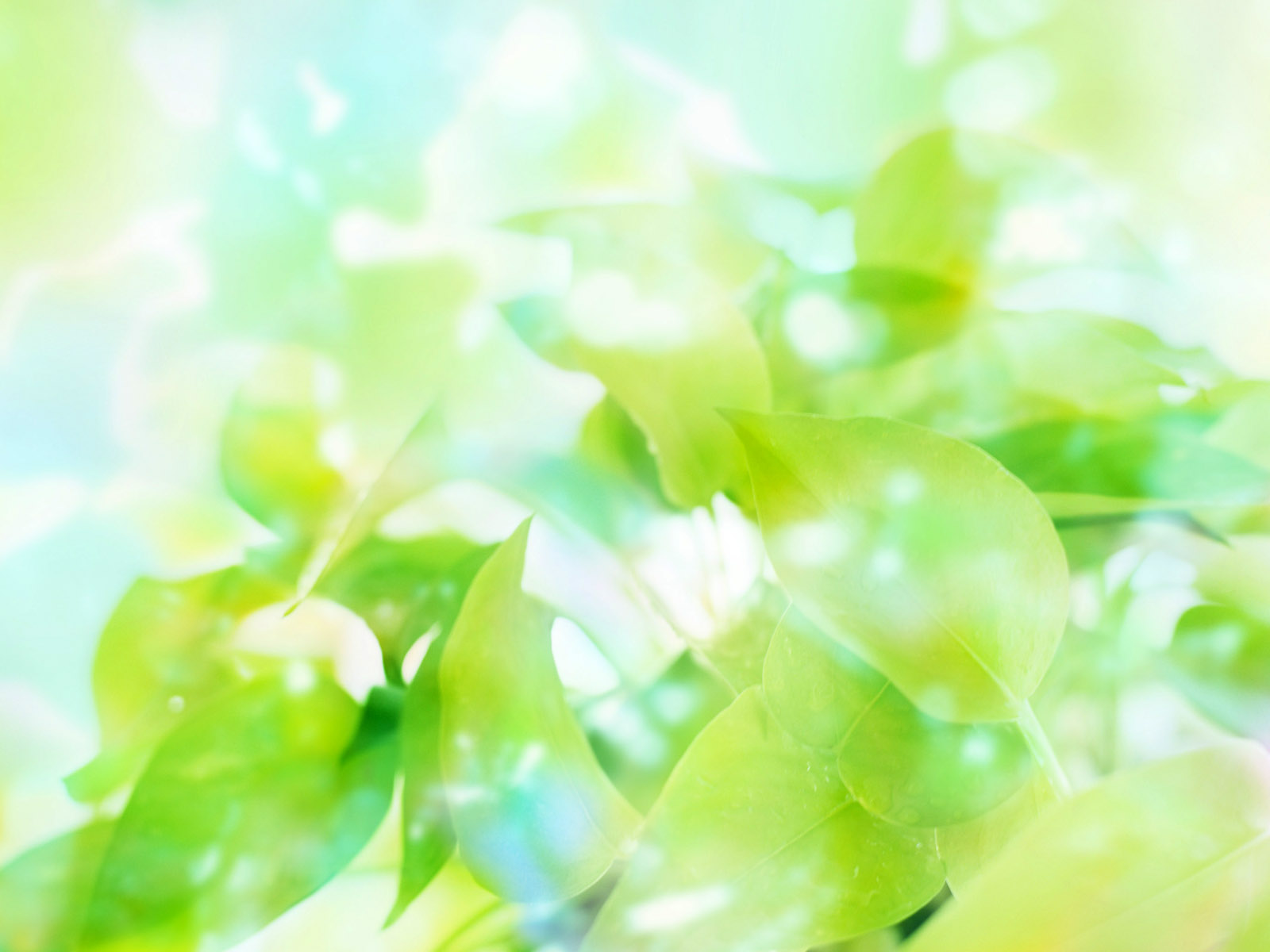 Green-Wallpaper-2AH